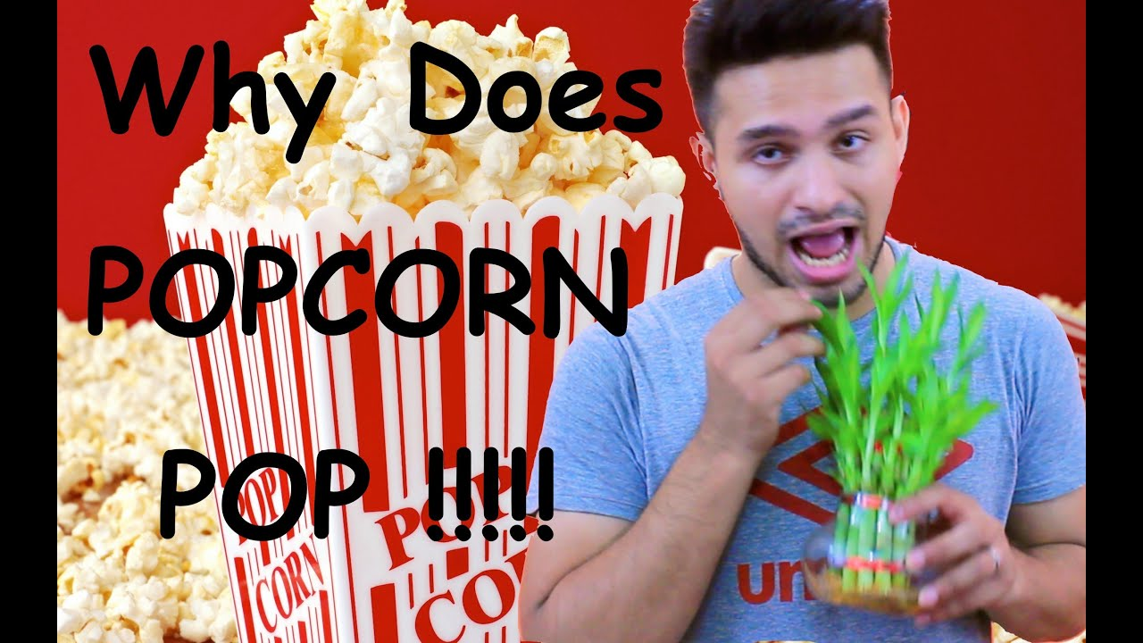 Why Does Popcorn Pop - YouTube