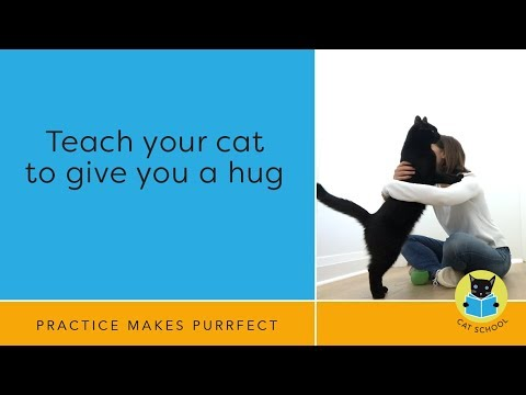 Cat Trick: Teach Your Cat To Hug