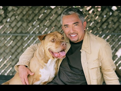Cesar Millan (Cesar 911) Interview | AfterBuzz TV's Spotlight On