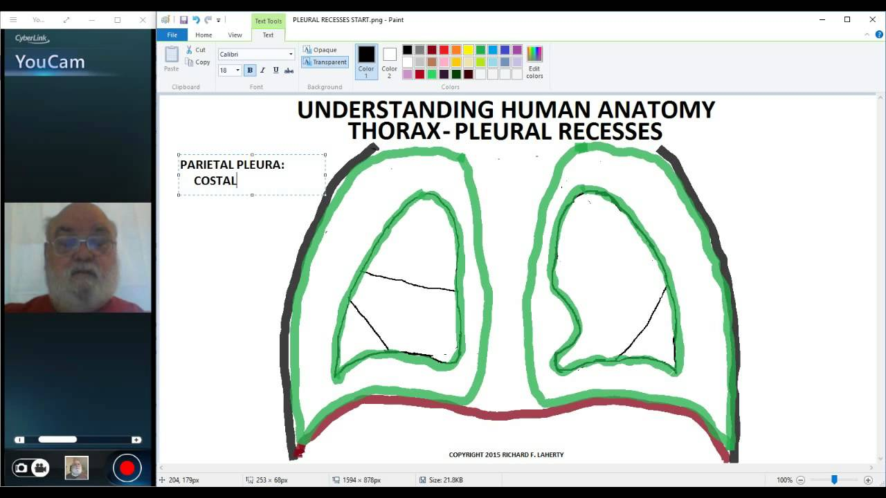 UNDERSTANDING HUMAN ANATOMY-THORAX PLEURA - YouTube