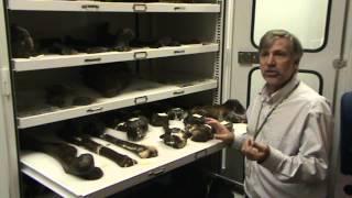 first dinosaur ever mounted still resides at academy of natural sciences of natural sciences of drex