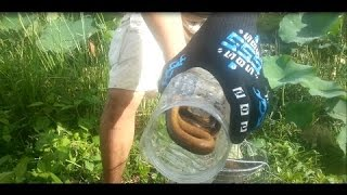 amazing eels fish trap ,  how to make eel fish trap