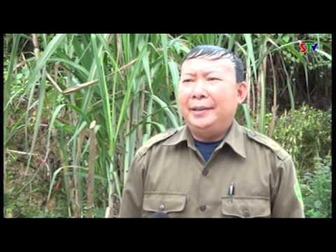 Trang cở sở Đài Truyền thanh - Truyền hình huyện Phù Yên ngày 25/11/2016