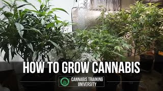 How to Grow Weed-Cannabis Grow-Best Marijuana Growing
