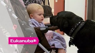 Nepal The Black Labrador Changed An Injured Soldiers Life - Part 2 | Extraordinary Dogs