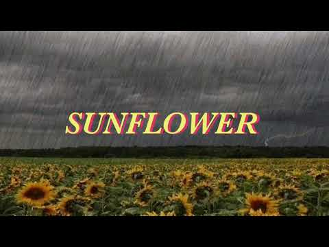 Sunflower - Allie X (LYRIC VIDEO) FROM Sierra Burgess Is A Loser 🌻🌹