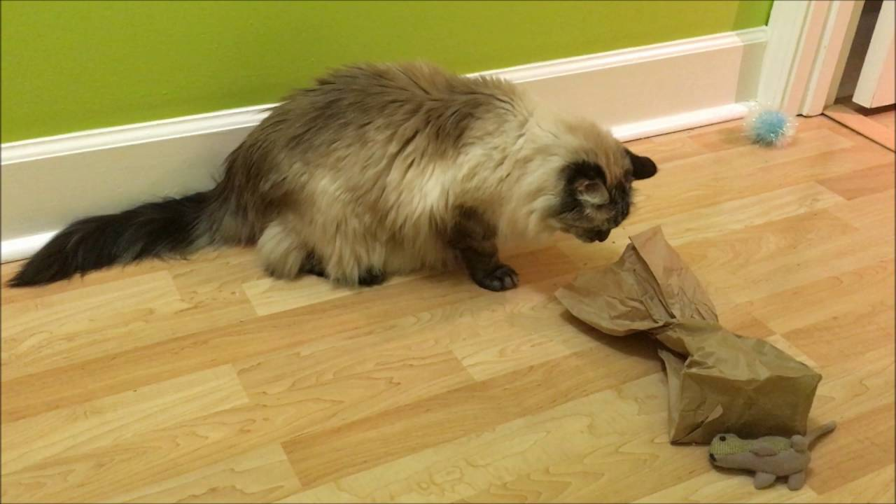 Homemade Puzzles - Food Puzzles for Cats