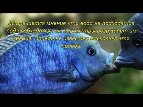 Голубой дельфин.Fish Tank TV.