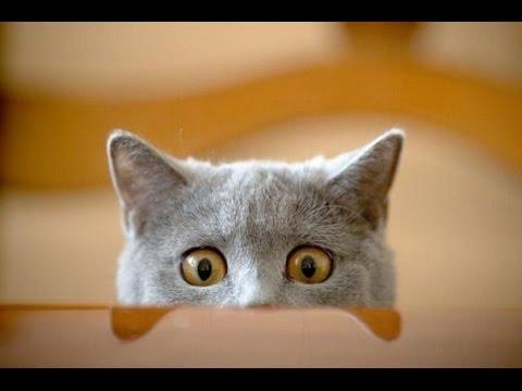 Смешные видео про котов и кошек бесплатно