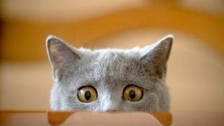Смешные кошки и коты и котята. Смешное видео про котов и кошек. Funny cats video.