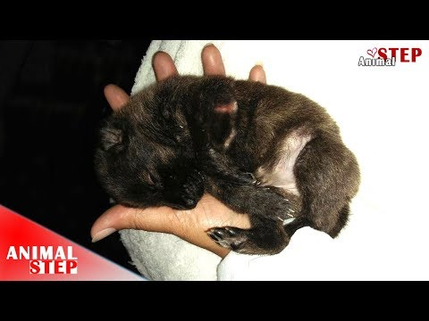 Little Puppy Gets Rescued After Spent Life for Days with Injured