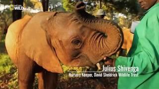 Убийство Слонов  2018 Фильм  Познавательное документальное