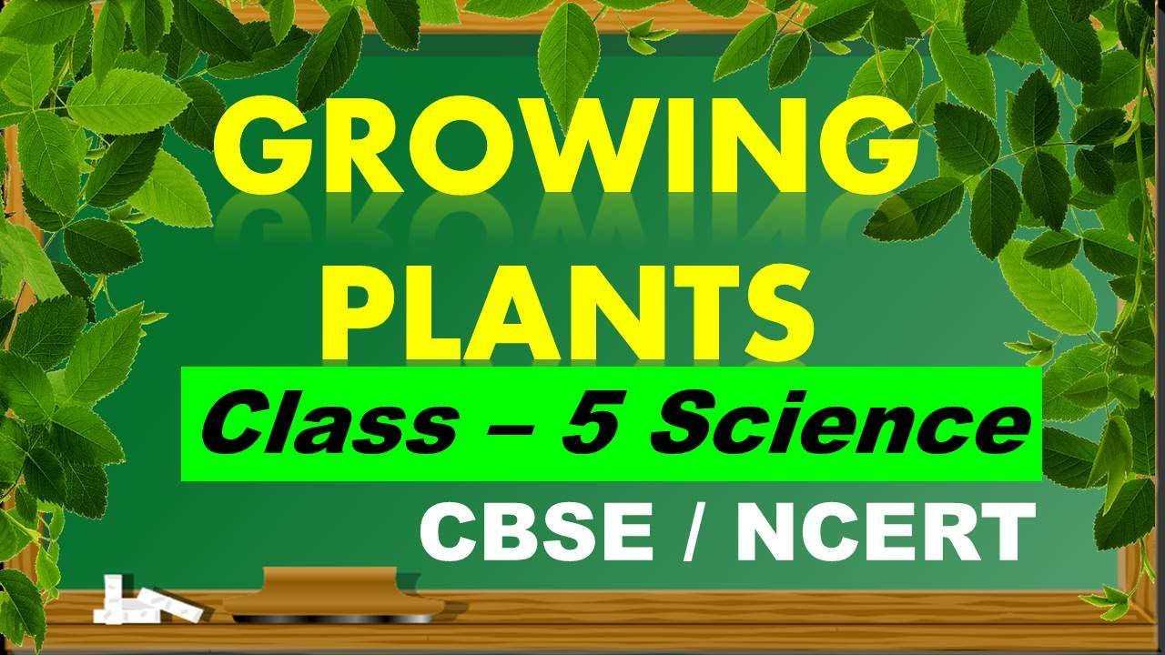 medium resolution of Class-5 CBSE Science   Growing 🌱Plants   Chapter-1  NCERT Solutions   with  worksheet link in desc. - YouTube