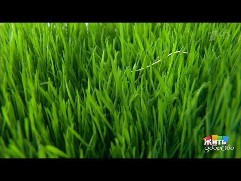 Вопрос: Почему пророщенное зерно не имеет отношения к здоровому питанию?