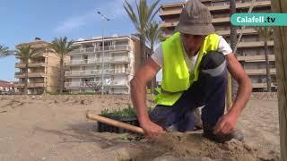 Prova pilot d'un sistema dunar per regenerar les platges