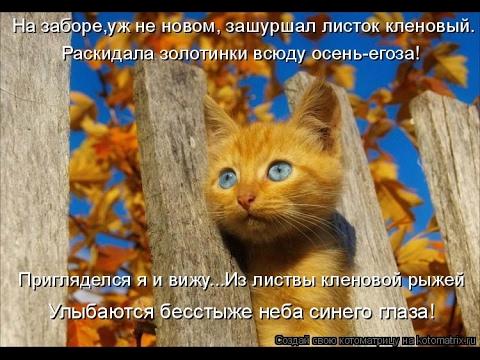 Смешные картинки про кошек и котят Выпуск №79  FUNNY CATS СМЕШНЫЕ КОШКИ