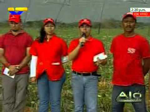 Primera cosecha de frijol para semillas certificadas se realizó en Planicie de Maracaibo