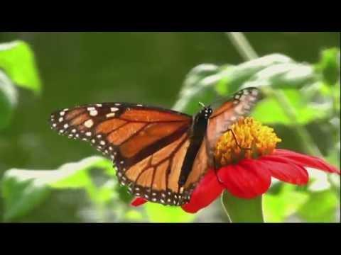 El milagro de la transformación - Palabras de Inspiración