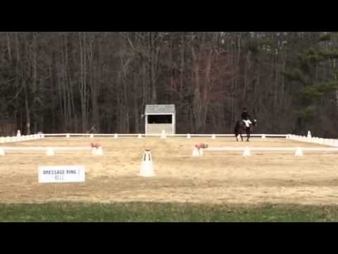 Lauren and Shiloh UNH Dressage WiFi