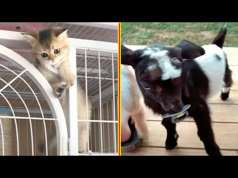 Cute And Funny Animals Videos Compilation – Cute Baby Animals Funny Moments – Viral Animals Videos !