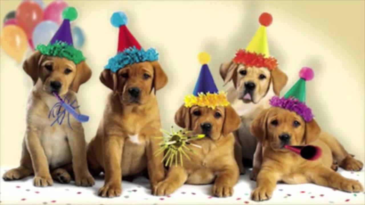 happy birthday images with dogs Happy Birthday Dogs Singing   YouTube happy birthday images with dogs