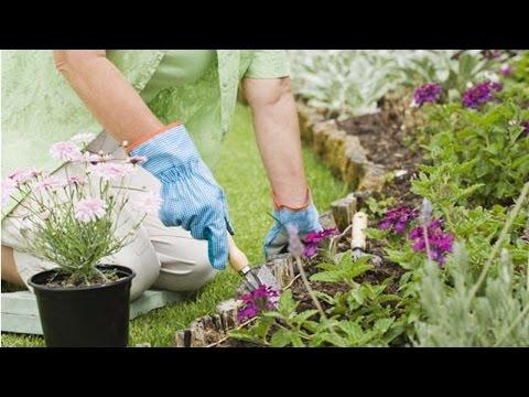 Planejamento, Implantação e Manutenção de Jardins - Cuidados com as Plantas