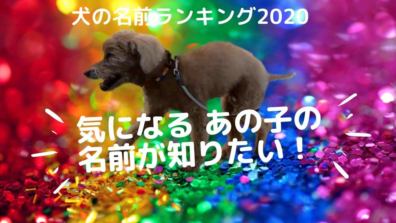 2020 ランキング の 犬 名前