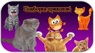 Подборка приколов с котами!