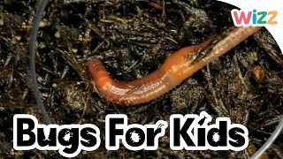 Worms For Kids