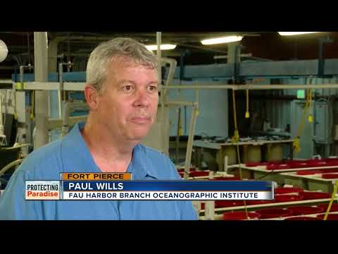 FAU Harbor Branch Works To Resolve World's Fish Sustainability Problem