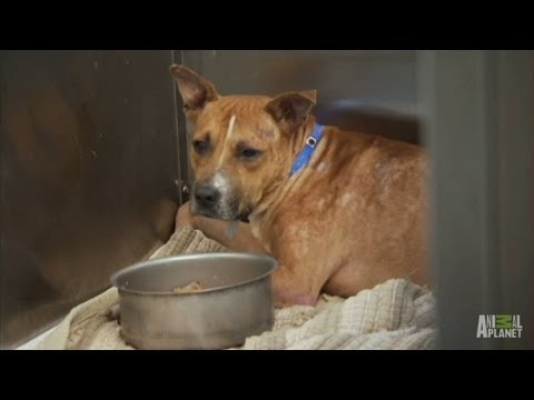 NBA Puppy Rescue! | Pit Bulls and Parolees