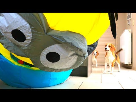Dogs Vs Minion Toys Dave and Stuart : Cute Beagle Dogs Louie & Marie