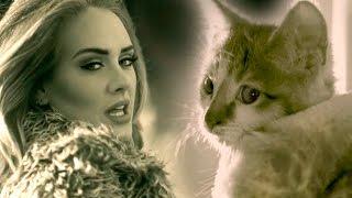 PAWDELE MEOW! Adele's Hello Parody with Kittens