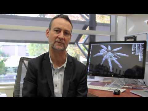 Prof Glenn King explains where spider venom comes from
