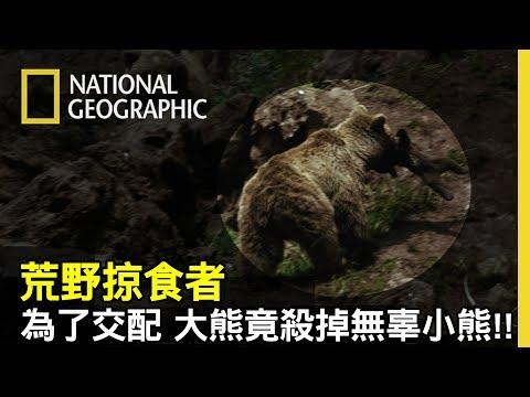 """🐻公熊為了要愛愛,竟殺掉阻礙的小熊!!😨而印度的懶熊媽媽為了保護小熊們,做出袋鼠般罕見的""""帶熊跑""""行為💕【荒野掠食者】"""