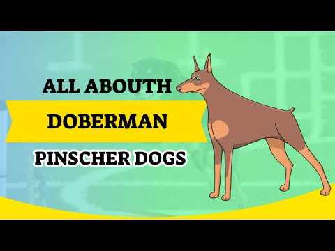 The doberman pinscher dogs.All about them.