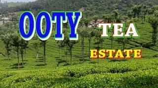 OOTY TEA FACTORY-TEA ESTATE-BEAUTIFUL SCENERY-COONOOR-TAMILNADU