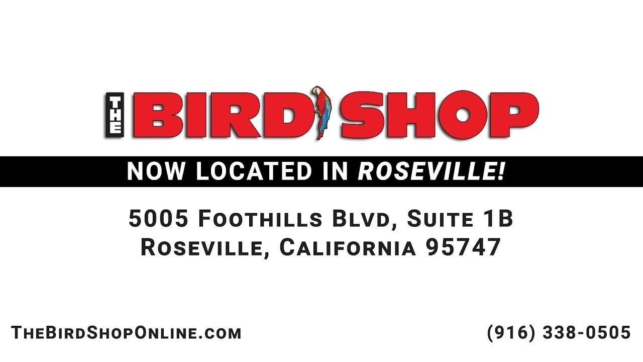 The Bird Shop