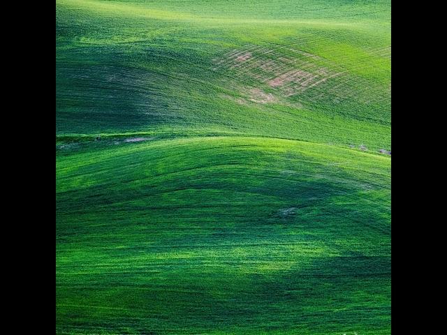 Splendido Verde - Roberto Manzoli