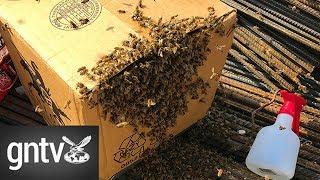 Rare bee colony rescued at Expo 2020 Dubai site