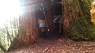 Didgeridoo + Drums + Hollowed out Redwood tree