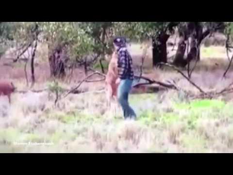 Man Slaat Kangoeroe In Gezicht
