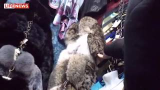 LIFE  NEWS: ВВЦ проверяет полиция из-за продажи шуб из кошек