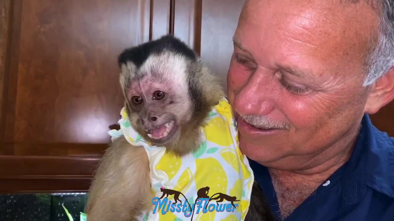 Female Monkey Angelika's way of saying her human dad is hers...night bottle 🍼 🐒🍼 🐒🍼 🐒