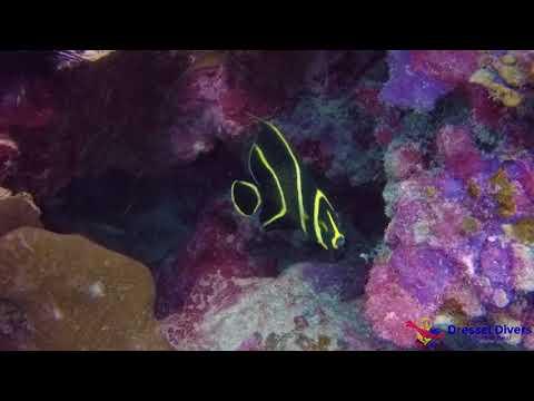 Jamaica Scuba Diving, Some incredible Jamaica Marine Animals.