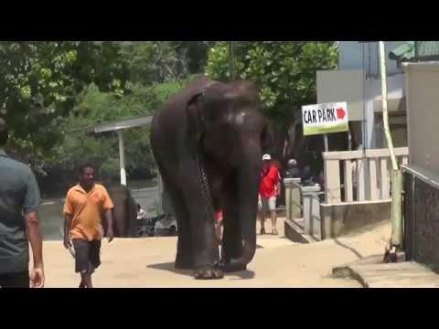 Sri Lanka Part 3