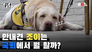 시각장애인 안내견 '조이'는 국회에서 뭘 할까?
