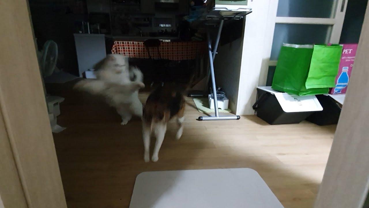 한밤의 우다다 (Running Cat)