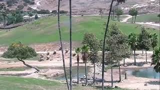 Giraffe Cam Live Stream