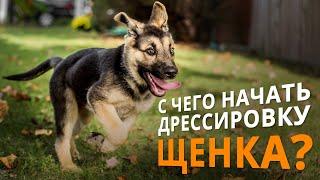 Дрессировка щенка - с чего надо начинать!